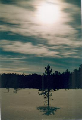 Moonlight over a snow-covered peat bog