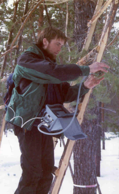 Chlorophyll fluorescence measurements on Pinus sylvestris needles