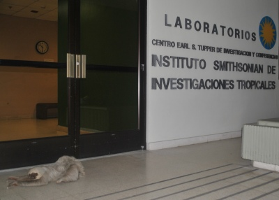 A late night visitor at the institute